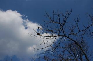 栗の木と空.JPG